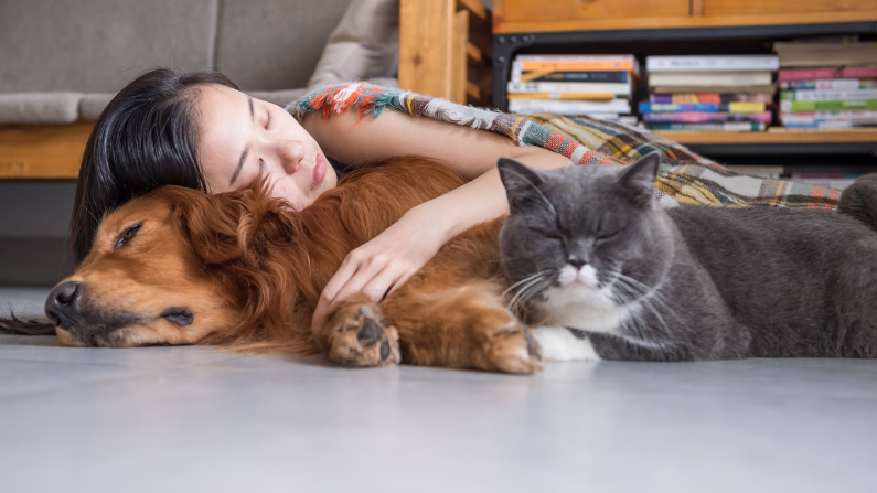 cat nap yourself to happiness